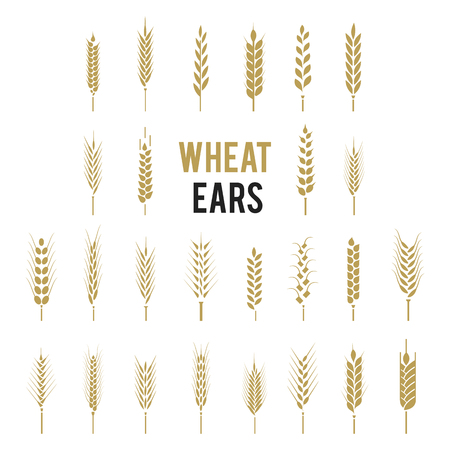 Wheat Ears Icons and Logo Set. Cereals icon set with rice, wheat, corn, oats, rye, barley. Ears of wheat bread symbols. Organic , agriculture seed, plant and food, natural eat.