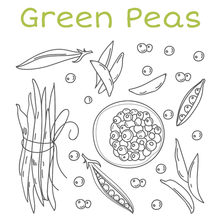 Pea pods and pods vector illustration. Vintage hand drawn. Vegetables banner and background. Иллюстрация