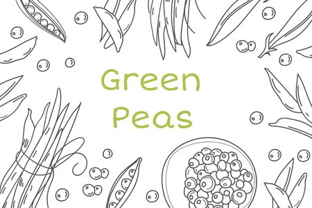 Pea hand drawn vector frame. Isolated Sketch of natural products drawing templates. Vegetables banner with line icons.