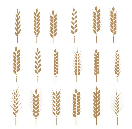 Cereals icon set with rice, wheat, corn, oats, rye, barley. Ears of wheat bread symbols. Vector illustration