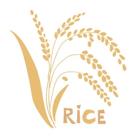 vector illustration of rice plant isolated on white background.