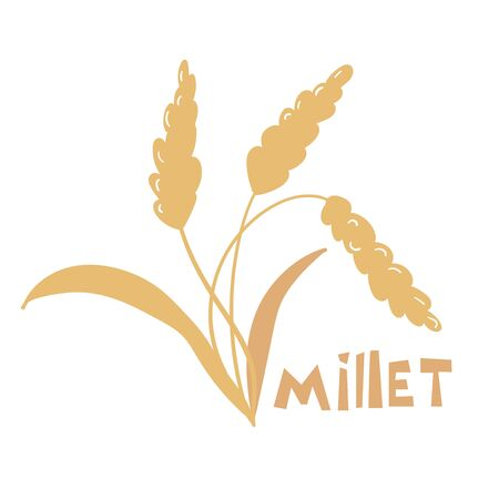 Illustration of pearl millet plant. Vector illustration of cereal grains