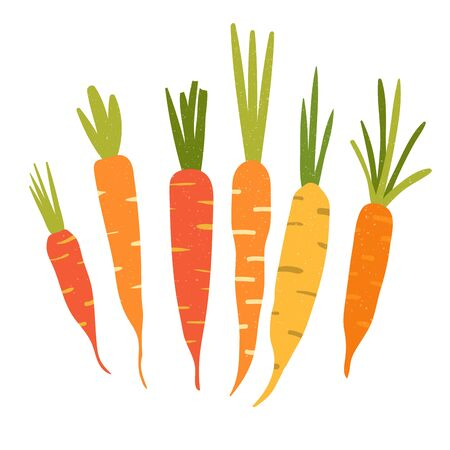 Carrot in flat style and isolated on white background.