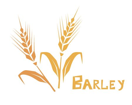 Wheat or barley ear. Cereal plants, agriculture industry organic crop products. Template for banner, card, poster, print and other design projects.