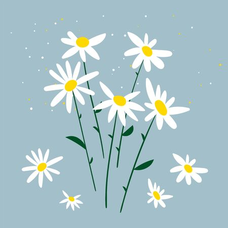 Vector illustration of chamomile. Bouquet of daisies on a blue background. Design for herbal tea, natural cosmetics, health care products, aromatherapy, homeopathy. Doodle blooming plants flat simple Ilustrace