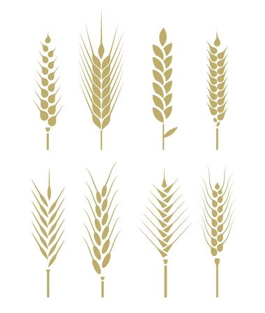 A field of ears of corn. Agricultural symbols isolated on white background. Design elements for bread packaging label. Vector illustration.