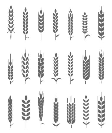 Wheat Ears Icons. Organic wheat, bread agriculture and natural eat.