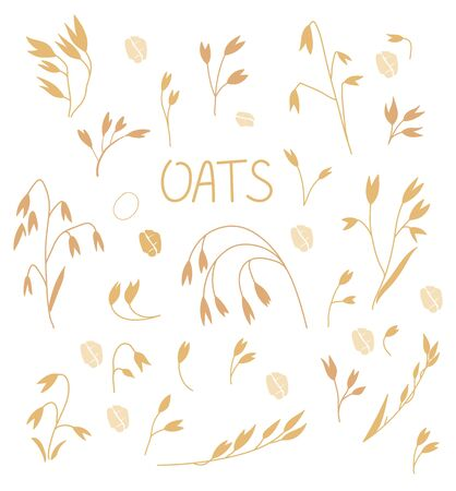 Set of oats in a flat style Isolated on a white background. Oat illustration, oatmeal flake and oat ear. Ears of wheat. Stalks of oats.