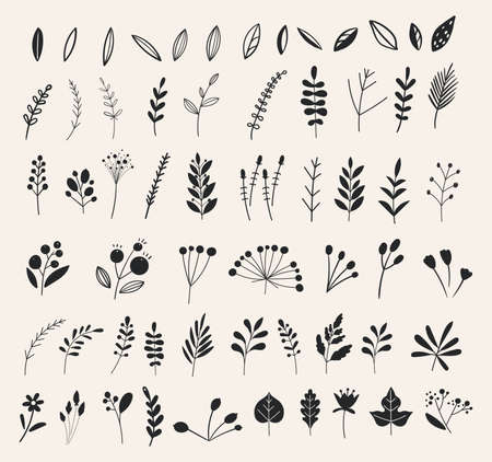 Hand drawn flowers and floral branches and berries, florals. Vector branches and leaves. Hand drawn floral elements in doodle style. Ink vintage botanical.