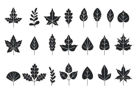 Black silhouettes of tree leaves. Autumn leaves isolated on white background. Vector illustration. leaf icon set. Set of tree branches, eucalyptus, palm leaves, herbs and flowers silhouettes Ilustracja