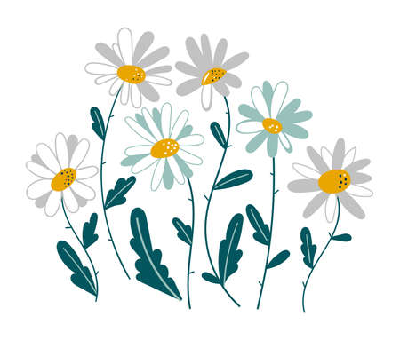 Set of isolated chamomile. Medicinal plant daisy chain vector illustration. Set of spring colorful flowers. Set of floral branch. Isolated on white for greeting cards, Easter, thanksgiving. Spring