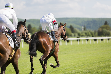 horses in field: Two riders on the racing circuit competition