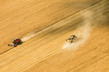 Aerial view on the combines working on the large wheat field. Zdjęcie Seryjne - 84716030
