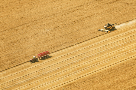 Aerial view on the combines working on the large wheat field. Zdjęcie Seryjne - 84716031