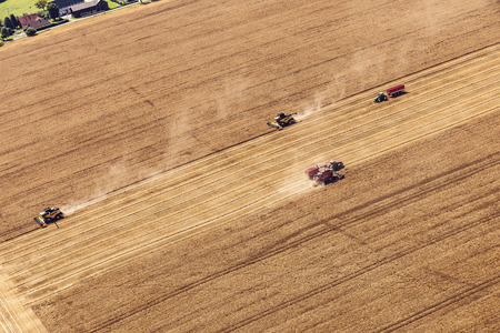Aerial view on the combines working on the large wheat field. Archivio Fotografico