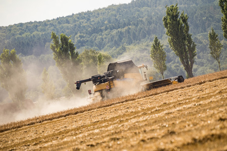 Vew on the combines working on the large wheat field. Saxon Switzerland, Germany.