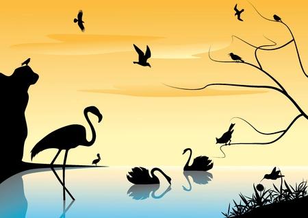 pelican: Landscape with birds