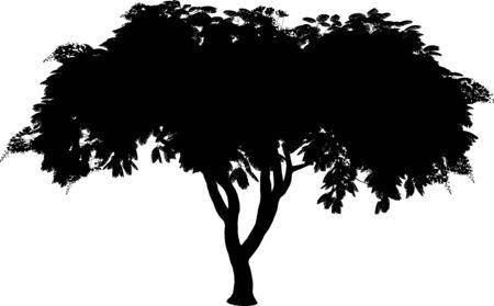 Poinciana silhouette  Illustration