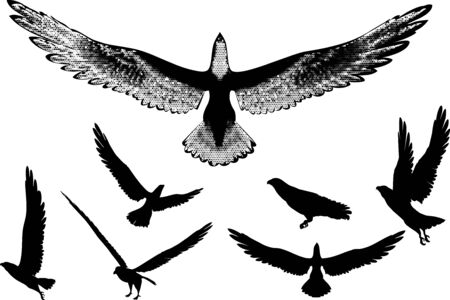 illustration of eagles silhouettes.   Vector