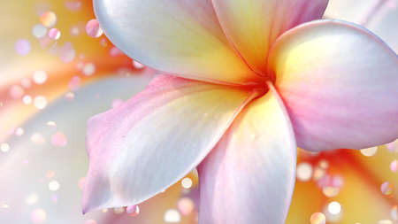 Tropical flower plumeria and bokeh lights. Фото со стока
