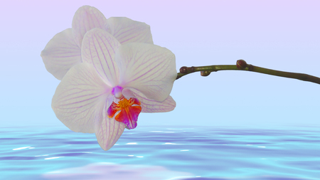 The relaxing scene with white orchid above water background.