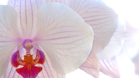 Relaxation background with close-up of beautiful white orchid. Focus on foreground. Фото со стока - 90546528