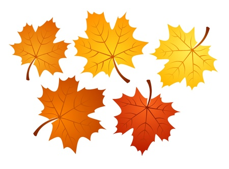 withered: Autumn maple leaves of various colors. Vector illustration.