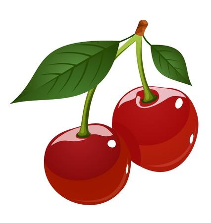 cherry: Vector illustration of cherries