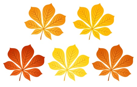 Five autumn chestnut leaves illustration  Stock Vector - 18259379