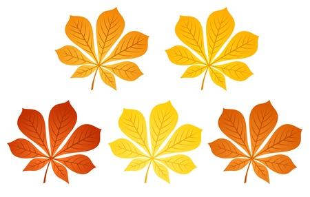 Five autumn chestnut leaves illustration Stock Vector - 18259379