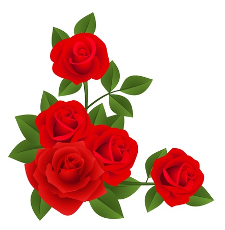 Red roses. Vector illustration. Çizim
