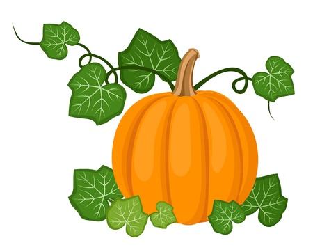 gourd: Orange pumpkin with leaves.