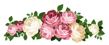 vintage roses: Pink and white roses.  Illustration