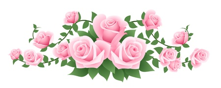 illustration of pink roses.