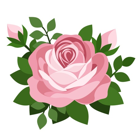 rosebud: Pink rose.  Illustration