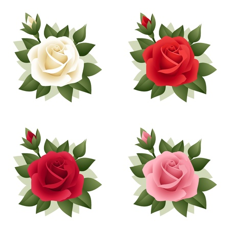 Set of four roses of various colors.  Vector