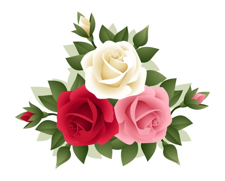three leaves: Three roses of various colors. Illustration