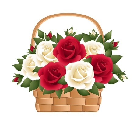 Red and white roses in basket. Vector