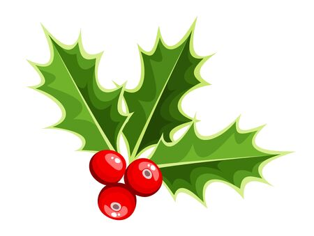holly leaves: Christmas holly.  Illustration