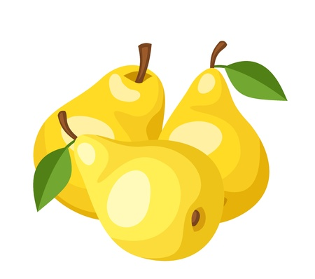 Three yellow pears  Vector