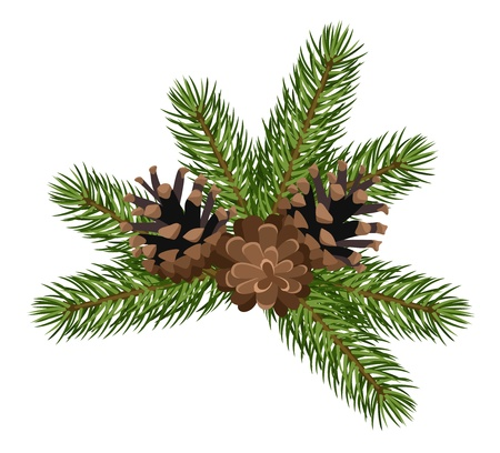 festive pine cones: Fir tree branches and cones.