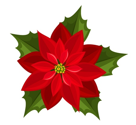 flor de pascua: Red poinsettia.