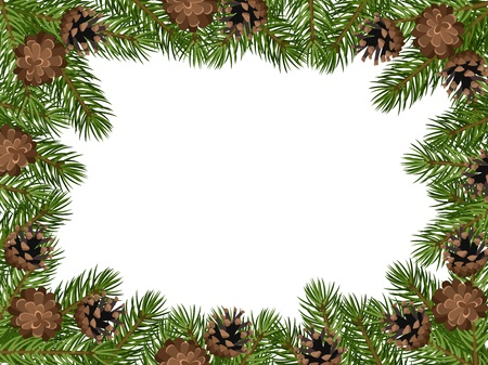 conifer: background with fir tree branches and cones.
