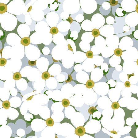 floret: Seamless background with small white flowers.
