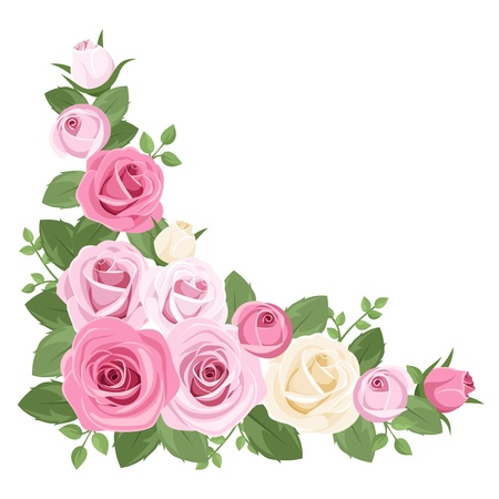 Pink and white roses, rosebuds and leaves. Vector illustration. Illustration