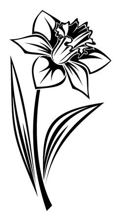 수선화 꽃의 검은 실루엣. 그림.