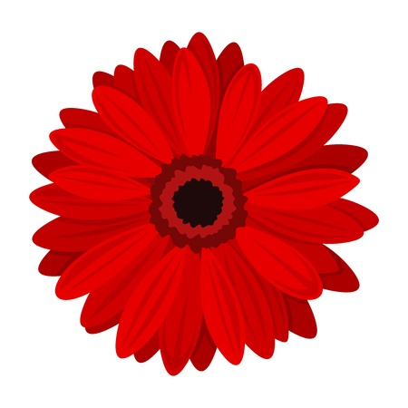 Red gerbera.  illustration.