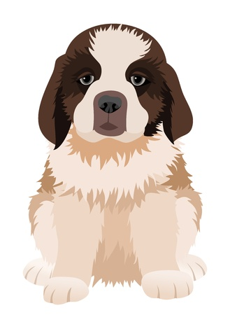 st bernard: St Bernard puppy.  illustration.