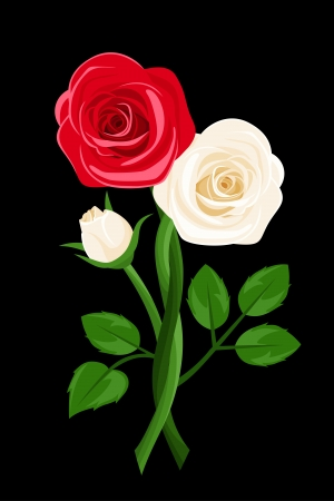 intertwined: Red and white intertwined roses. Vector illustration. Illustration