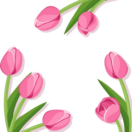 white tulip: Background with pink tulips  Illustration